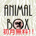 Animal Box(初月無料次月500円(税抜)コース)